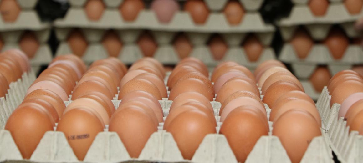 slider-hofladen-eier-2
