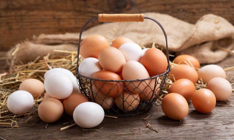 Protein & Vitalstoffe: 2 Fragen über Hühnereier beantwortet